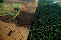 セラード居住地区を取り巻く大規模農地