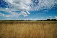 草原の上に広がる曇り空