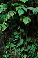 雨林プラント