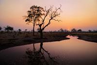 日没の木の陰