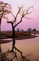 小池に映る木の陰