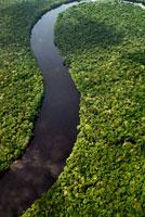 雨林を蛇行する川