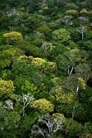 低地雨林の花の咲く木々