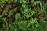丘の中腹に広がる地域独特の植物相