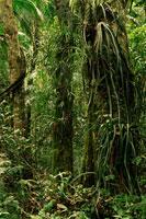 熱帯雨林 02314004388| 写真素材・ストックフォト・画像・イラスト素材|アマナイメージズ