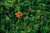 熱帯の未踏の雨林でポツンと花をつける木