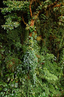 熱帯の雲の森