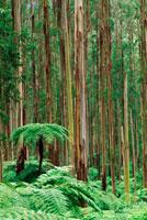 ユーカリの森のアンタルクティカ