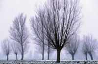 冬に葉を落とした木