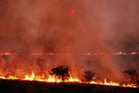 山火事 02314004495| 写真素材・ストックフォト・画像・イラスト素材|アマナイメージズ
