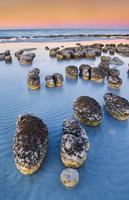 Stromatolites, Shark Bay, Australia
