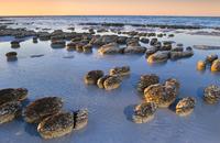 Stromatolites at low tide, Shark Bay, Australia