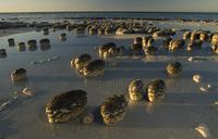 Stromatolites on the beach, Australia