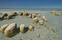 Stromatolites on the beach, Shark Bay, Australia