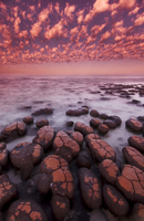 Stromatolites at dawn, Shark Bay, Australia