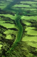 Eelgrass beds (aerial), Zostera sp., Shark Bay, Western Aust