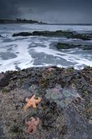 Tidepools at four mile beach, Santa Cruz, California