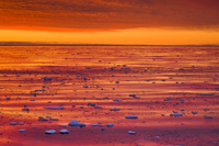 Ice floes at sunrise, Arctic Ocean, East Greenland