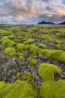 Moss covered landscape, Landmannalaugar, Iceland