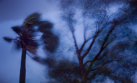 Wind-whipped trees during storm, Senegal