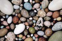 Bird egg collection, Western Foundation of Vertebrate Zoolog