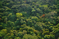 Rainforest canopy (aerial), Congo (DRC)