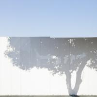 樹木のシルエットが映る白いフェンス