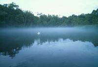 湖と一羽の白鳥 北海道 02319000008| 写真素材・ストックフォト・画像・イラスト素材|アマナイメージズ