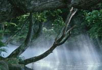 もやがかかった湖 北海道 02319000010| 写真素材・ストックフォト・画像・イラスト素材|アマナイメージズ