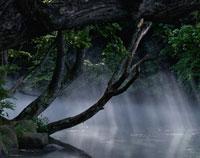 沼にさす木漏れ日と緑 02319000029| 写真素材・ストックフォト・画像・イラスト素材|アマナイメージズ