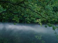 沼に映る緑と漂う靄 02319000031A| 写真素材・ストックフォト・画像・イラスト素材|アマナイメージズ