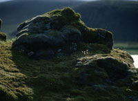 苔の生えた岩と花 02319000039| 写真素材・ストックフォト・画像・イラスト素材|アマナイメージズ