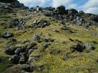 苔の生えた岩と黄色の花 02319000042| 写真素材・ストックフォト・画像・イラスト素材|アマナイメージズ