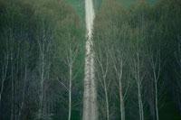 森林と一本道 02319000046| 写真素材・ストックフォト・画像・イラスト素材|アマナイメージズ
