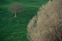 草原に立つ木 02319000047| 写真素材・ストックフォト・画像・イラスト素材|アマナイメージズ