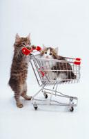 猫の入ったカートを押す猫