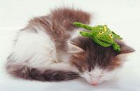 眠っている猫 02322001341| 写真素材・ストックフォト・画像・イラスト素材|アマナイメージズ