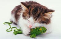 蛙と猫 02322001366| 写真素材・ストックフォト・画像・イラスト素材|アマナイメージズ