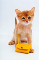 鞄を提げた猫 02322001403| 写真素材・ストックフォト・画像・イラスト素材|アマナイメージズ