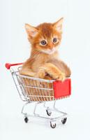 カートに入った猫 02322001405| 写真素材・ストックフォト・画像・イラスト素材|アマナイメージズ