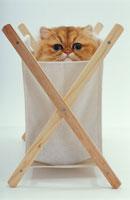 袋から顔を出す猫 02322002637| 写真素材・ストックフォト・画像・イラスト素材|アマナイメージズ