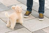 飼い主と遊ぶ犬 02322003259  写真素材・ストックフォト・画像・イラスト素材 アマナイメージズ