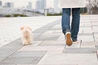 飼い主と歩く犬の後姿 02322003260  写真素材・ストックフォト・画像・イラスト素材 アマナイメージズ