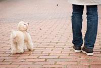 お散歩する犬 02322003261  写真素材・ストックフォト・画像・イラスト素材 アマナイメージズ