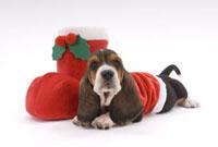 クリスマス衣装をきた子犬