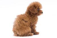 横向きに体を丸めて座る犬