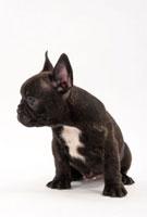 横を向く黒い子犬