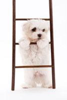 はしごと子犬