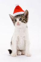 サンタ帽子をかぶっている仔猫 02322004999| 写真素材・ストックフォト・画像・イラスト素材|アマナイメージズ