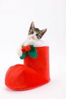 クリスマス長靴に入っている仔猫 02322005000| 写真素材・ストックフォト・画像・イラスト素材|アマナイメージズ